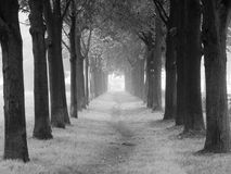 Trees in a fog. Black-and-white Royalty Free Stock Photography