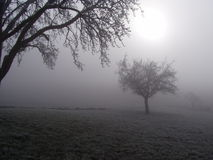 Trees in the fog. Sun shining through the fog on field with trees. taken near forch, zurich, switzerland, on a winter's day in december 2004 Royalty Free Stock Photos