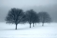 Trees in the fog. With blue tint Stock Images