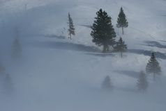 Trees in fog. Lonely trees looking out from fog on a mountain covered with snow Royalty Free Stock Photo