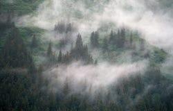 trees and fog Stock Photos