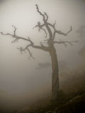 Trees in fog. In the Ai-Petri mountains stock photos