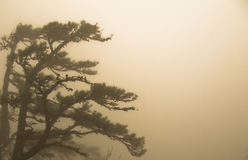 Trees in fog. In the Ai-Petri mountains royalty free stock photos