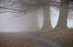 Trees in fog alkong path Royalty Free Stock Photos