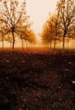 Trees and fog in autumn stock image