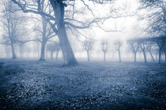 Trees in the fog Stock Image