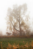 Trees in a fog Royalty Free Stock Photos