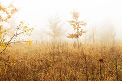 Trees in a fog Royalty Free Stock Image