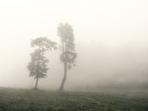 Trees with fog Royalty Free Stock Image