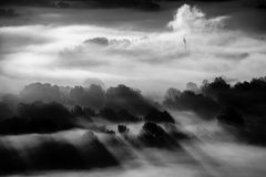 Trees in the fog black and white photo Royalty Free Stock Photography