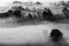 Trees in the fog black and white photo Stock Photography