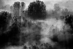 Trees in the fog black and white photo Stock Image