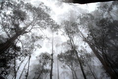 Trees in a Fog Royalty Free Stock Photography