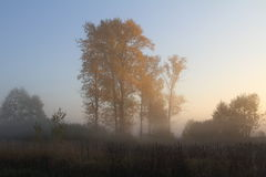 Trees in fog. Early autumn foggy morning in the village Stock Images