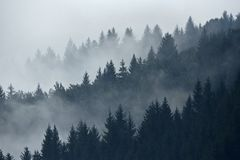 Trees in the fog in the early morning on the mountain. Fog goes through the trees in the early morning hours in autumn, a mountainous region royalty free stock images