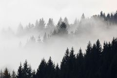 Trees in the fog in the early morning on the mountain. Fog goes through the trees in the early morning hours in autumn, a mountainous region stock photo