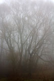 Trees in fog Royalty Free Stock Photo