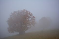 The trees with fog in the forest Stock Photo