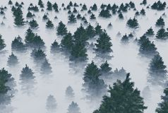 Trees in the fog. A forest of fir trees in the fog. 3d rendering Royalty Free Stock Photos