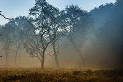 Trees in fog Royalty Free Stock Image