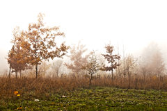 Trees in a fog Royalty Free Stock Photo