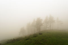 Trees with fog on hill Stock Image