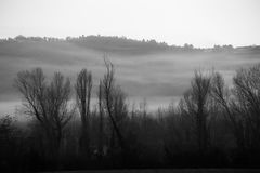 Trees, fog and hills Stock Photography