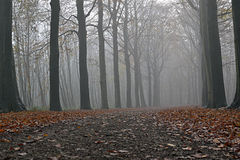 Trees in the fog. Stock Photography