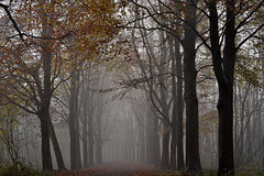 Trees in the fog. Stock Images
