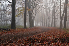 Trees in the fog. Royalty Free Stock Photos