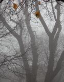 Trees in fog .Last autumn leafs. Tees in fog.Last leaf's of Autumn Royalty Free Stock Image