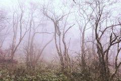 Trees in fog at park China.  royalty free stock photos