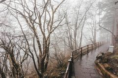 Trees in fog at park China.  royalty free stock images