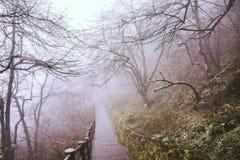 Trees in fog at park China.  royalty free stock photo