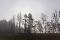 Trees in the fog Royalty Free Stock Photo