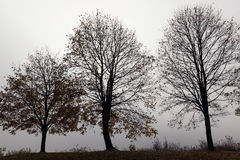 Trees in the fog Royalty Free Stock Photos