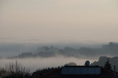 Trees in fog. Siena, Tuscany, Italy. stock image