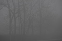 Trees in the fog. Some Treesquite invisible, immersed in the fog Royalty Free Stock Photo