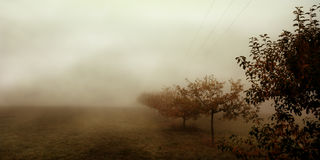 Trees in the fog. Sorrowful picture of Trees in the fog in october Royalty Free Stock Photo