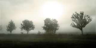 Trees in the fog. Sorrowful picture of Trees in the fog in october Royalty Free Stock Images