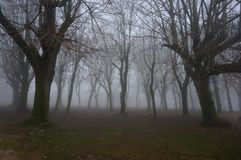 Trees In Fog. Spooky misty trees in a thick fog Stock Photography