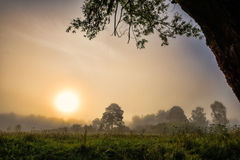 Trees in fog in summer morning Royalty Free Stock Photo