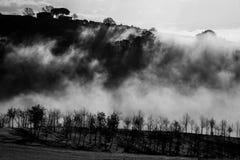 Trees, fog and sunrays Stock Photography