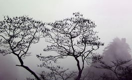 Black silhouettes of trees in a fog Royalty Free Stock Photography