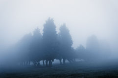 Trees in fog with vintage filter effect Stock Photos