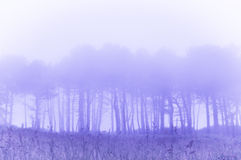 Trees in fog with vintage filter effect stock images