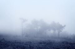 Trees with fog Royalty Free Stock Photography
