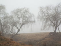 Trees in the fog. On a winters morning Royalty Free Stock Images