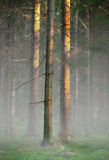 Trees in foggy cold morning Stock Photography