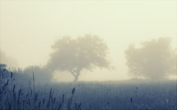 Trees in the foggy field, soft focus Stock Photography
